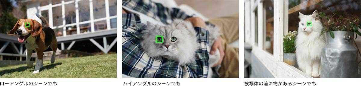 SONY α6400のリアルタイム瞳AFイメージ画像