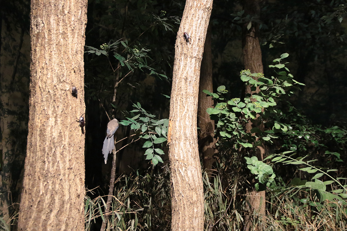 夜の森の撮影画像